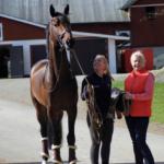 häst3